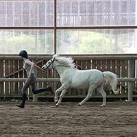 Cours d'équitation enfants et adolescents Abbeville