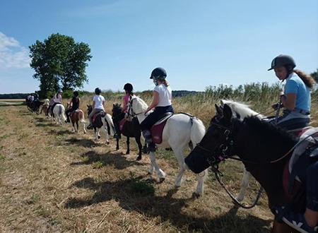 Cours de baby poney Abbeville